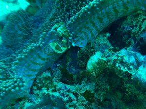 Diving Sumba Adventure resort